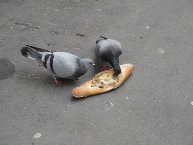 piccioni-parisiens