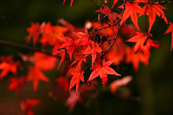 4-momijigari-autunno-in-giappone